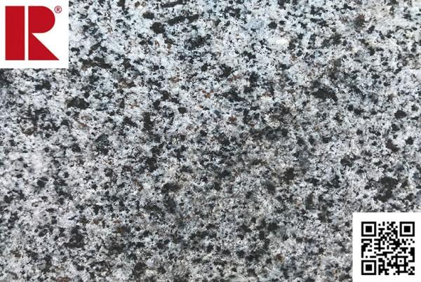 Andorinha Grey